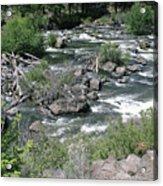 Oregon Stream Acrylic Print