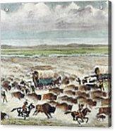 Oregon Trail: Stampede Acrylic Print