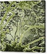Oriental Garden Acrylic Print