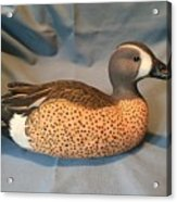 Original Blue Winged Teal Sculpture  Acrylic Print