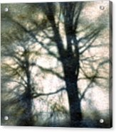 Original Tree Acrylic Print