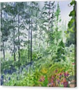Original Watercolor - Summer Pine Forest Acrylic Print