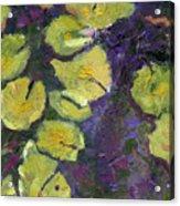 Orlando Lilies Acrylic Print