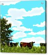 Osage County Cows Acrylic Print