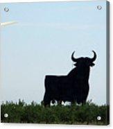 Osborne Bull 3 Acrylic Print