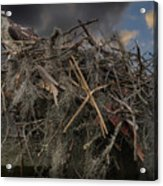 Osprey Protecting The Nest Acrylic Print