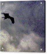 Osprey Silhouette Acrylic Print