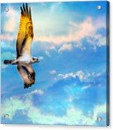 Osprey Soaring High Against A Beautiful Sky Acrylic Print