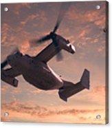 Ospreys In Flight Acrylic Print