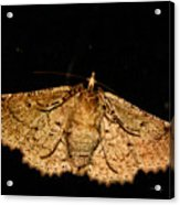 Other Side Of The Moth On The Window Acrylic Print