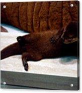Otter Like It Acrylic Print