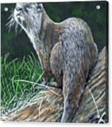 Otter On Branch Acrylic Print