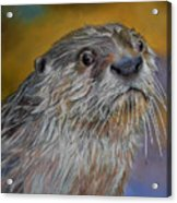 Otter Or Not Acrylic Print