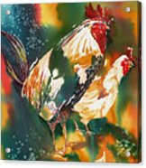 Our Neighbors Roosters Acrylic Print