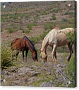 Out In The Open Range Acrylic Print