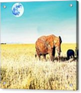 Out In The Serengeti Acrylic Print