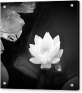 Out Of The Depths Bw Acrylic Print