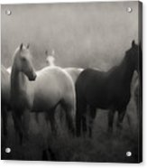 Out Of The Mist Acrylic Print by Ron  McGinnis