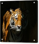 Out Of The Shadows Acrylic Print
