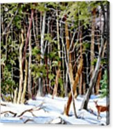 Out Of The Woods Acrylic Print