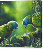 Out On A Limb - St. Lucia Parrots Acrylic Print