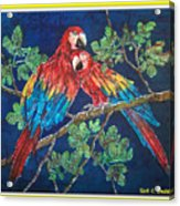Out On A Limb- Macaws Parrots - Bordered Acrylic Print