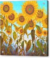 Ovation Sunflowers Acrylic Print