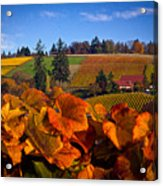 Over The Durant Vineyards Acrylic Print