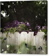 Over The Fence Acrylic Print