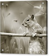 Over The Fence In Black And White Acrylic Print
