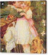 Over The Garden Wall Acrylic Print by Frederick Morgan