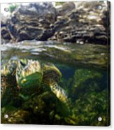 Over Under Honu Acrylic Print
