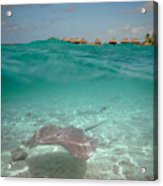 Over-under Water Of A Stingray At Bora Bora Acrylic Print