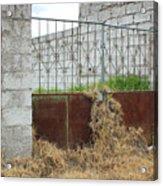 Overgrown Rusted Gate Acrylic Print