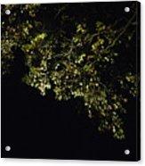 Overhead Branch Acrylic Print