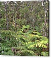 Overlooking The Rainforest Acrylic Print