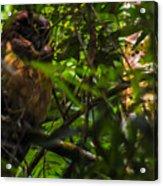 Owl-1 Acrylic Print by Fabio Giannini