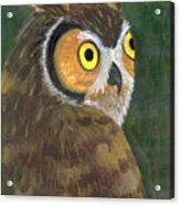 Owl 2009 Acrylic Print