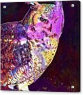 Owl Bird White Raptor  Acrylic Print