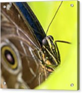Owl Butterfly In Yellow Flower Acrylic Print