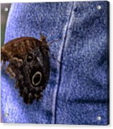 Owl Butterfly On Jeans Acrylic Print