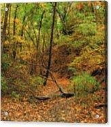 Owl Canyon In Autumn 2 Acrylic Print