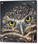 Owl Face To Face Acrylic Print