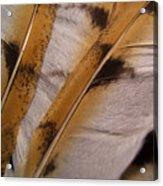 Owl Feathers Photograph Acrylic Print