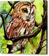 Owl From Butterfingers And Secrets Acrylic Print by Morgan Fitzsimons