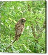 Owl II Acrylic Print