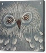 Owl In The Blue Acrylic Print by Ginny Youngblood