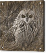 Owl In The Woods Acrylic Print
