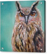Owl No.5 Acrylic Print