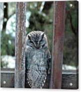 Owl On Deck Acrylic Print